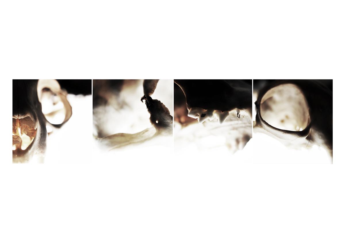 Catgrid 1